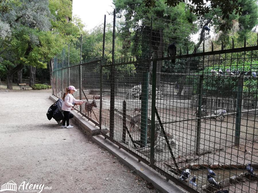 Ogrody Narodowe Ateny - Mini Zoo
