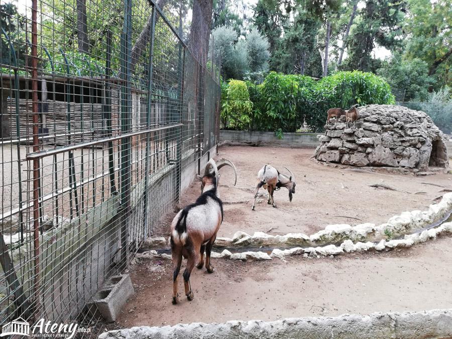 Mini Zoo w Ogrodach Narodowych